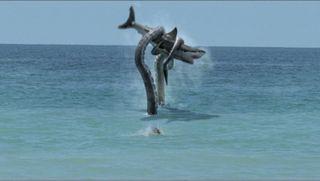 Sharktopus1
